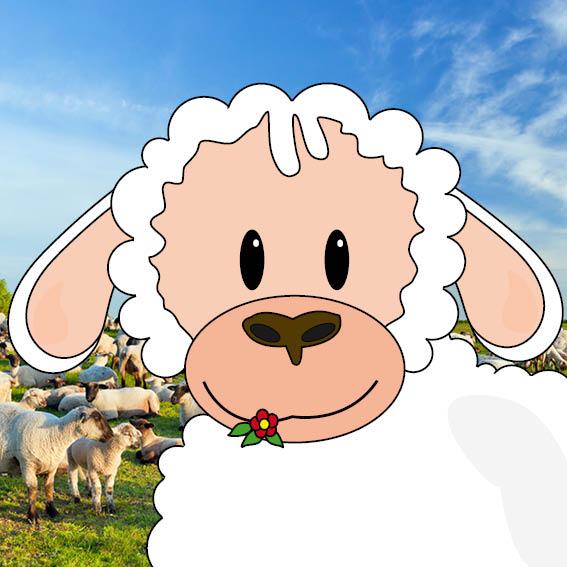 Schaapje Tilly foto schapen