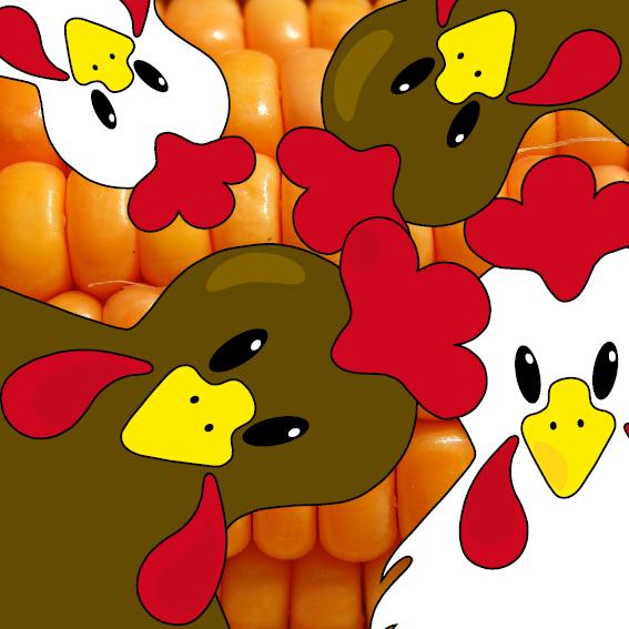 Bruine en witte kippen foto mais