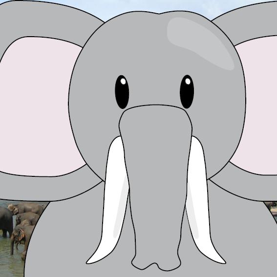 Olifant Tania foto olifanten