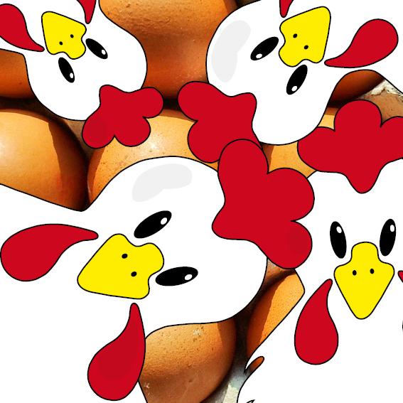 Witte kippen foto eieren