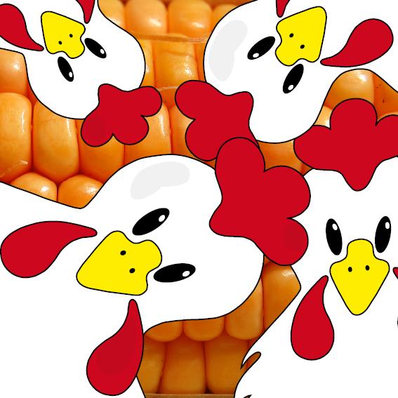 Witte kippen foto mais